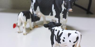 milk2 お友達追加|牛