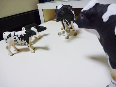 022 生還|牛